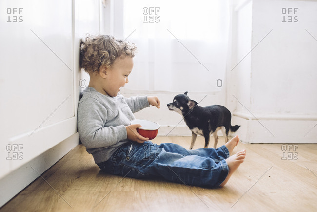 Boy sitting on floor plays with little dog