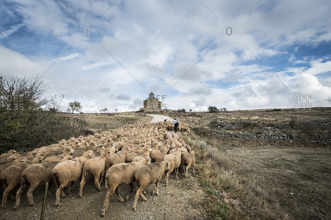 Soria, Spain - November 4, 2017: Shepherds herding large flock of sheep up isolated track