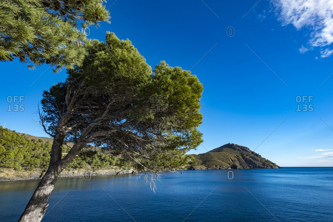 Tree framing deep blue sea and Cap Norfeu in Cap de Creus natural park in Catalonia, Spain
