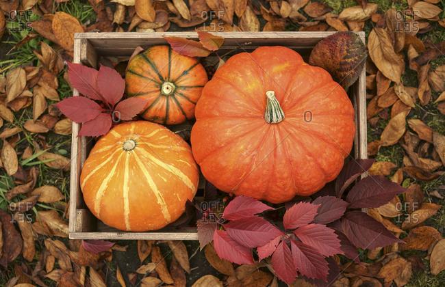 Pumpkins in wooden crate - Offset