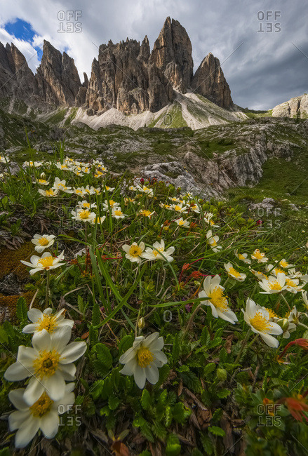 Wildflowers In The Dolomite Mountains Of Italy As Dusk Approaches; Cortina, Italy