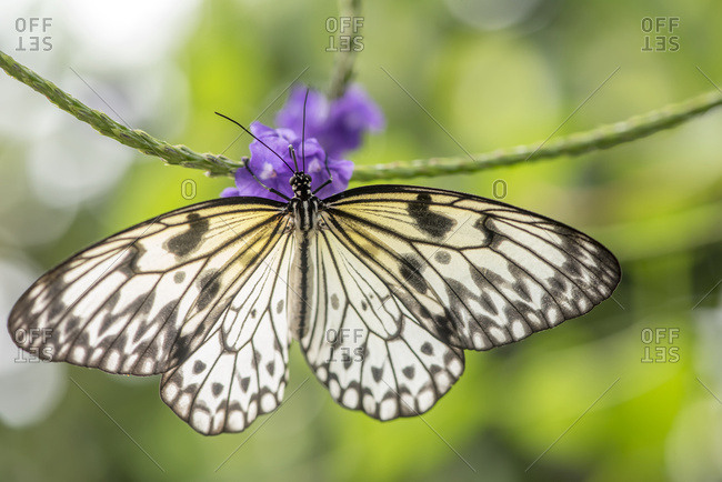 Close-Up Of A Butterfly Resting On A Blossoming Plant At Victoria ...