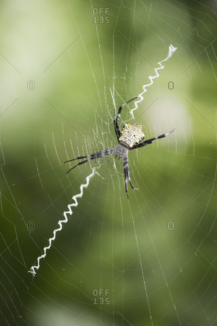A Spider In It's Web; Hawaii, United States Of America