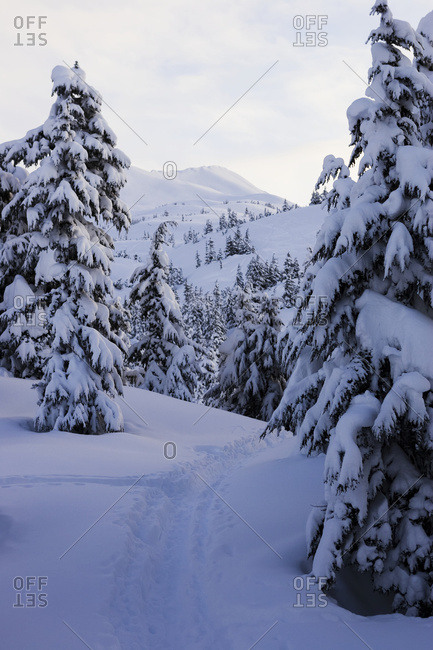Snow Covered Pine Trees And Mountain Range In Winter With A Trail In The Deep Snow; Alaska, United States Of America