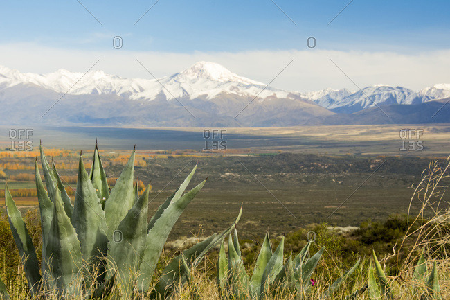 Cactus In The Foreground Of A Desert Plain Stretching To The Snow-Capped Mountains In The Distance; Tupungato, Mendoza, Argentina