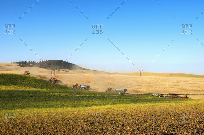 Harvesting A Crop On Fields Against A Blue Sky; Washington, United States Of America