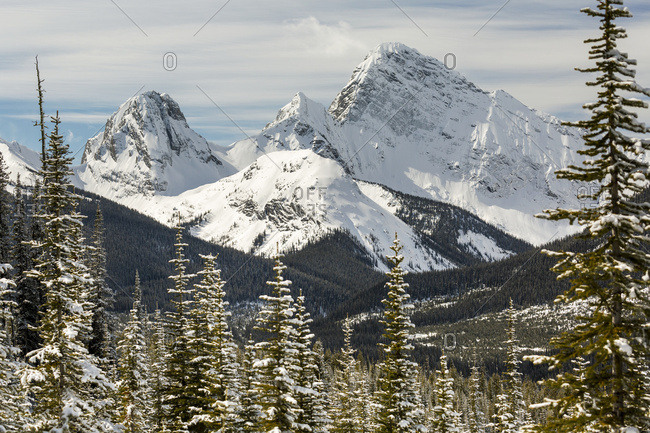 Snow Covered Mountain Range Framed By Snow Covered Evergreen Trees; Alberta, Canada