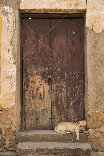Puppy Sleeping In An Old Doorway; Tarata, Bolivia