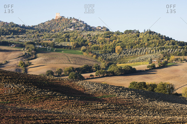 Smooth Curves Of Tuscany Ploughed Land And Green Hills, Covered By Autumn Coloured Forest, Rows Of Olive Trees And Small Stone Houses Near Castiglione D'orcia; Tuscany, Italy