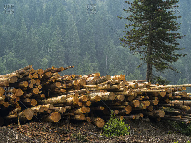 A pile of cut logs and a forest on a mountainside in the background; Riondel, British Columbia, Canada