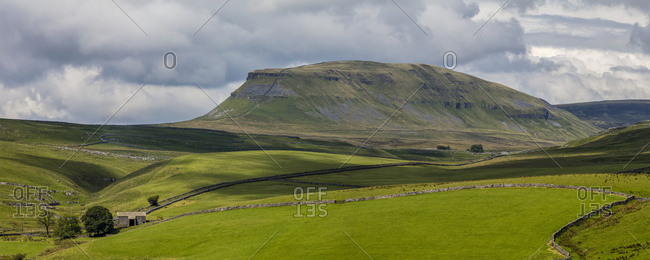 Lush green fields divided by stone walls  and Penyghent in Yorkshire Dales National Park; Yorkshire, England