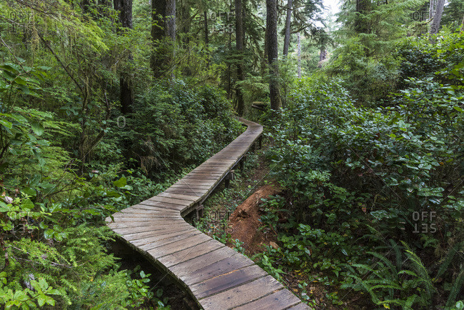A wooden boardwalk leading through a rainforest in Pacific Rim National Park, Schooner Cove Trail, Vancouver Island; British Columbia, Canada