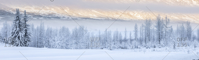 Warm afternoon sunlight bathes the distant mountains in-between low clouds obscuring the hillside, hoar frost covered birch trees lining the shaded foreground, Turnagain Pass, Kenai Peninsula, South-central Alaska; Alaska, United States of America