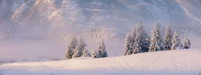 Spruce trees covered in fresh snow with fog and low cloud obscuring the birch tree forest blanketed in snow in the background, the mountainsides of Turnagain Pass bathed in warm light, Kenai Peninsula, South-central Alaska; Alaska, United States of America