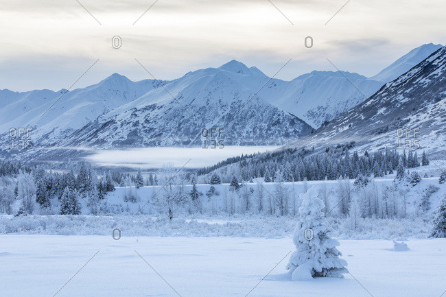 A single spruce tree covered in fresh snow stands in front of a mountainside blanketed in white snow and low clouds, Turnagain Pass, Kenai Peninsula, South-central Alaska; Alaska, United States of America