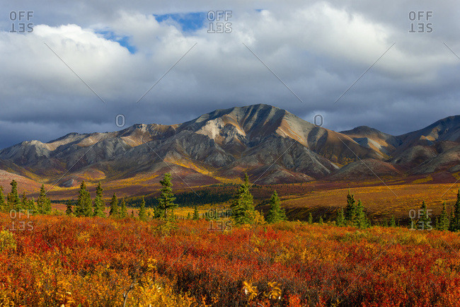 Autumn Coloured Foliage At The Base Of The Mountain With Storm Clouds; Denali, Alaska, United States Of America