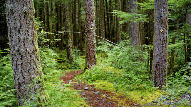 Trail In A Forest Along Chilliwack River Road; Chilliwack, British Columbia, Canada