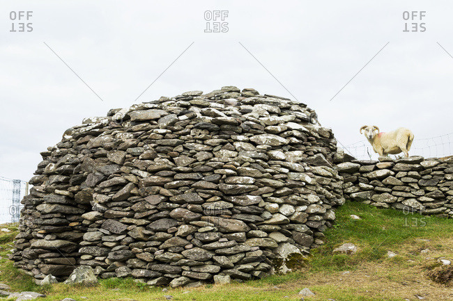 Bee Hive Stone Structure With Ram On Stone Fence; Dingle, County Kerry, Ireland