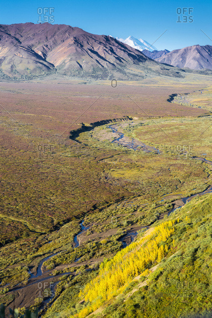 Scenic View Of A Meandering River In Polychrome Pass With Yellow Aspen Trees And The North Peak Of Mt. McKinley In The Background, Denali National Park; Alaska, United States Of America