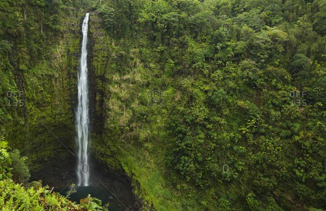 View Of Akaka Falls, Akaka Falls State Park; Honomu, Island Of Hawaii, Hawaii, United States Of America