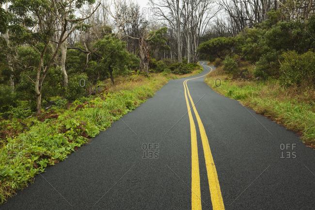 Mauna Loa Road, Hawaii Volcanoes National Park; Island Of Hawaii, Hawaii, United States Of America