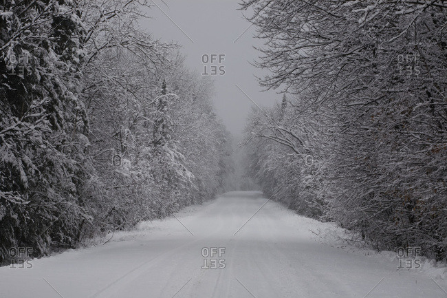 Snow Covered Road Lined With Leafless Trees In Winter; Brome Lake, Quebec, Canada
