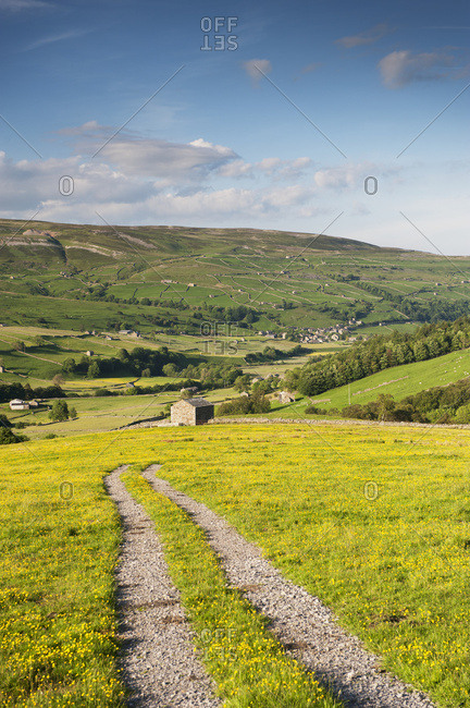 Farm Track Across A Dales Hay Meadow In Early Summer; Swaledale, Yorkshire, England