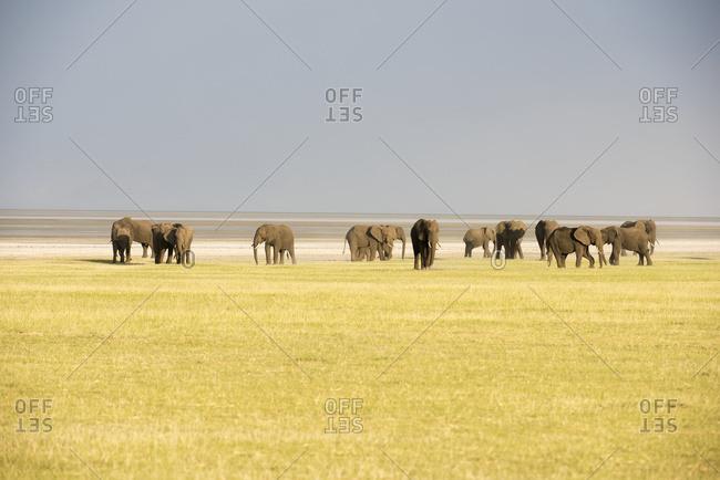 Herd Of Elephants In Lake Manyara National Park; Tanzania