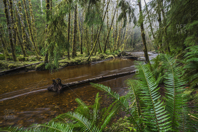 Haans Creek Flows Through The Green Rainforest Near Sandspit Which Is On Haida Gwaii; British Columbia, Canada