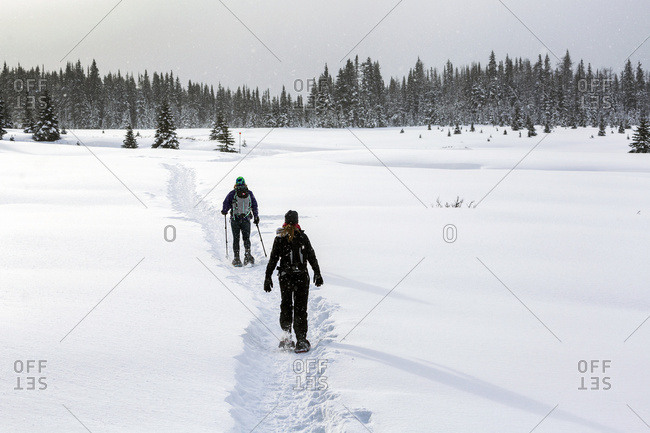 Two Female Snowshoers On A Snow Covered Trail In An Open Meadow With Snow Covered Evergreen Trees; Kananaskis Country, Alberta, Canada