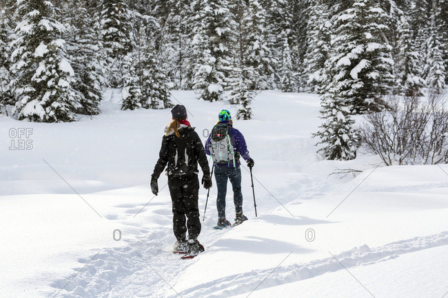 Two Female Snowshoers On A Snow Covered Trail Around Snow Covered Evergreen Trees; Kananaskis Country, Alberta, Canada