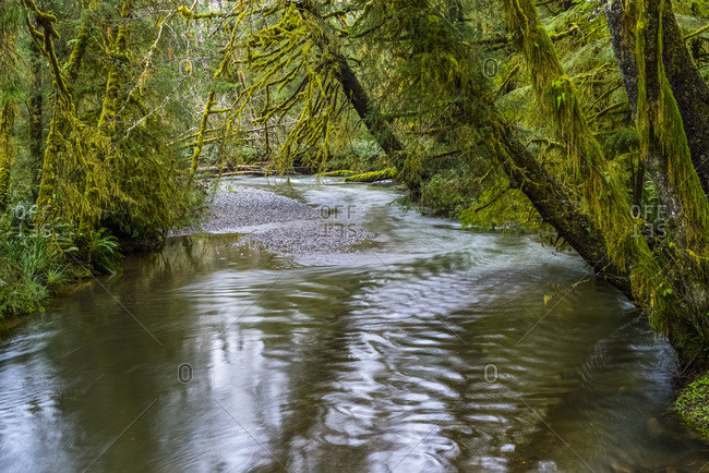 Ecola Creek Flows Through Mossy Rain Forest; Cannon Beach, Oregon, United States Of America