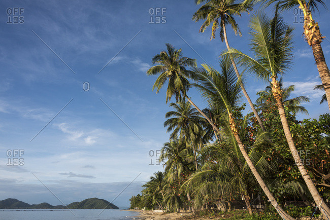Palm Trees Line The Beach Along The Gulf Of Thailand Under A Blue Sky; Ko Samui, Chang Wat Surat Thani, Thailand