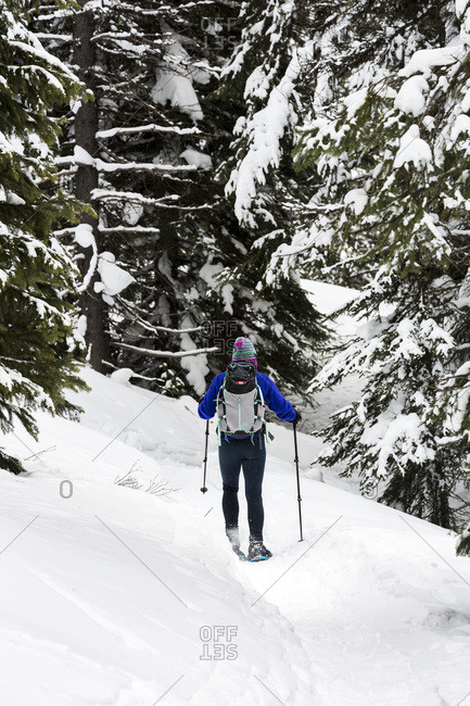 Female Snowshoeing Along A Trail In A Snow Covered Forest, East Of Field; British Columbia, Canada