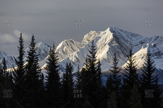 Snow Covered Mountains With Early Morning Light, Silhouetted Forest In The Foreground; Kananaskis Country, Alberta, Canada