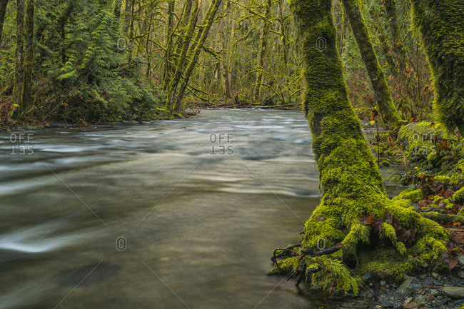 The Beautiful Rainforest Of Goldstream Provincial Park; British Columbia, Canada
