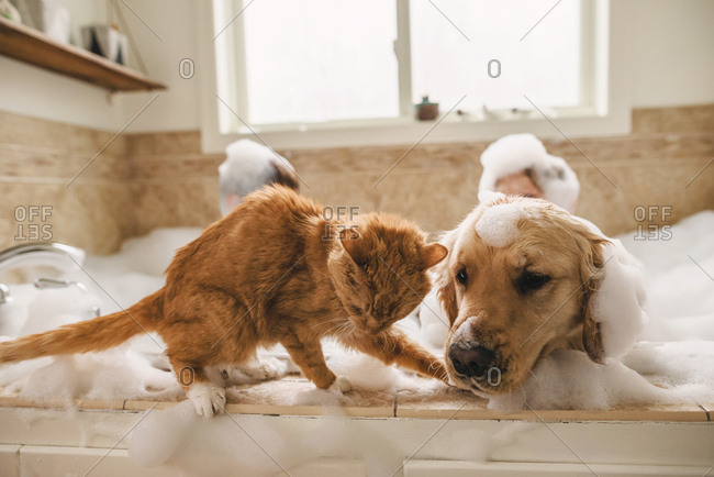 Cat on the edge of a bathtub while dog and kids take bubble bath