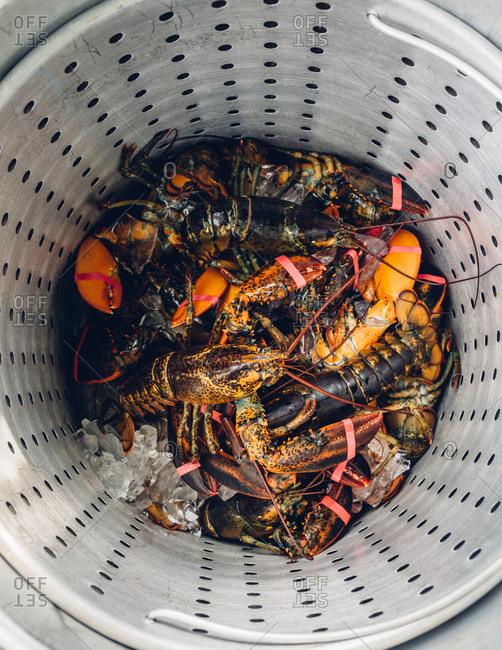 Freshly caught lobsters on ice in basket