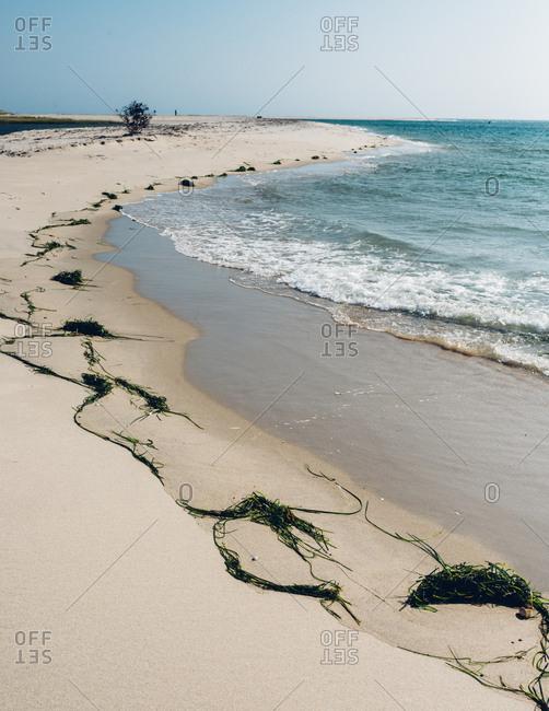 Sandy beach with seaweed on Cape Cod