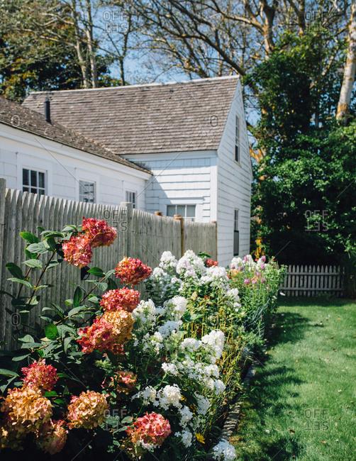 Flowers growing in garden in side yard of home in Cape Cod