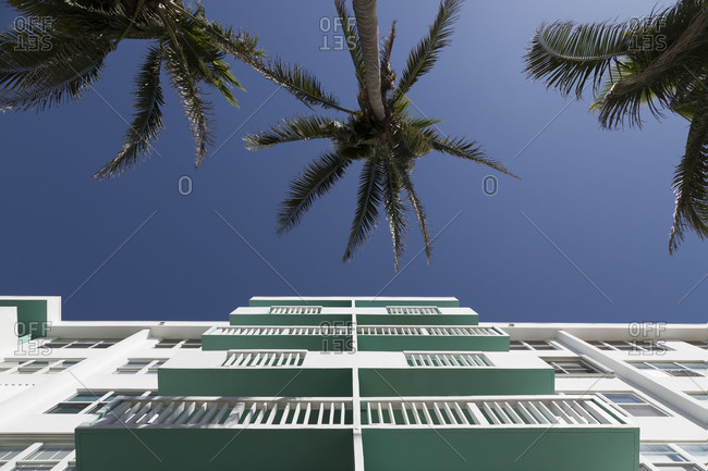 Low angle view of a building with balconies beside palm trees