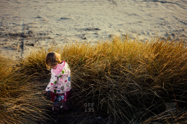 Toddler girl walking in tall grass on a beach in the fall