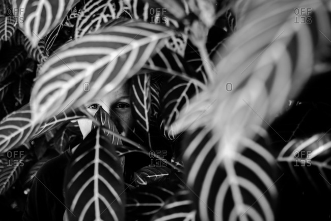 Boy hiding behind leafy plant in black and white