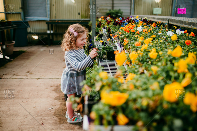 Little girl looking at flowers garden center