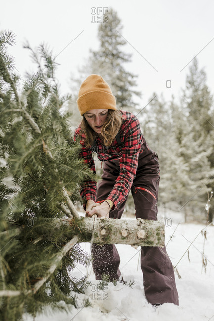 Woman cutting pine tree in forest during winter