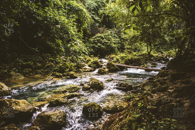 Scenic view of stream flowing at forest