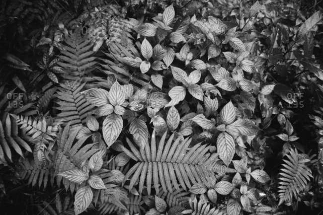 Black and white detail of lush jungle plants