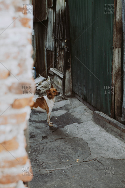Stray dog on a street in Southeast Asia