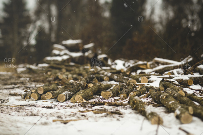 Firewood on snow covered field in forest