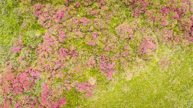 Abstract aerial view of vegetation on Frisian Islands, the Netherlands.